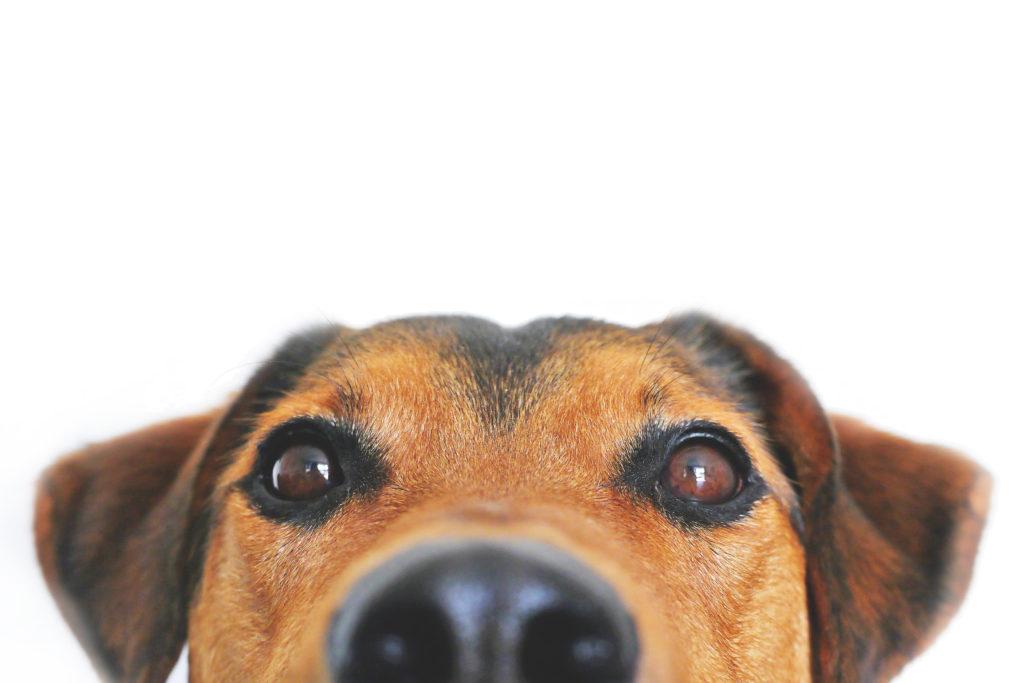 chien regarde en haut